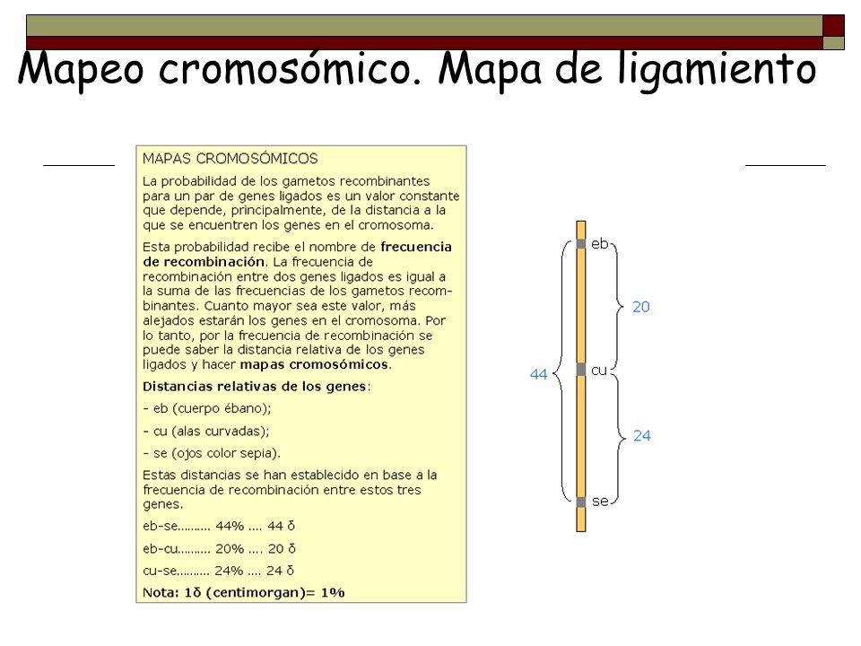 Mapeo cromosómico. Mapa de ligamiento