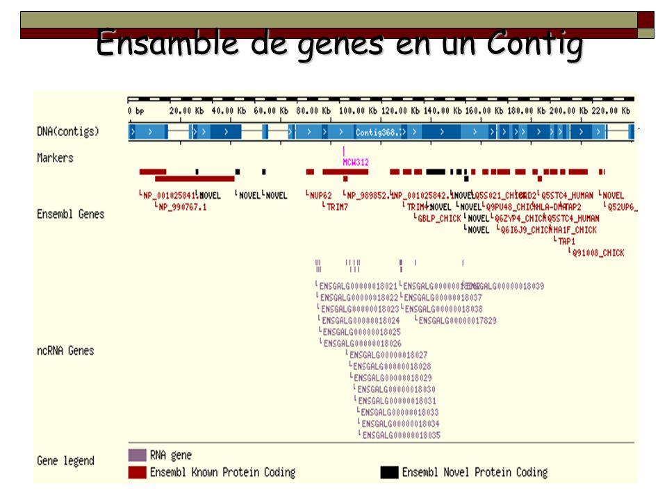 Ensamble de genes en un Contig