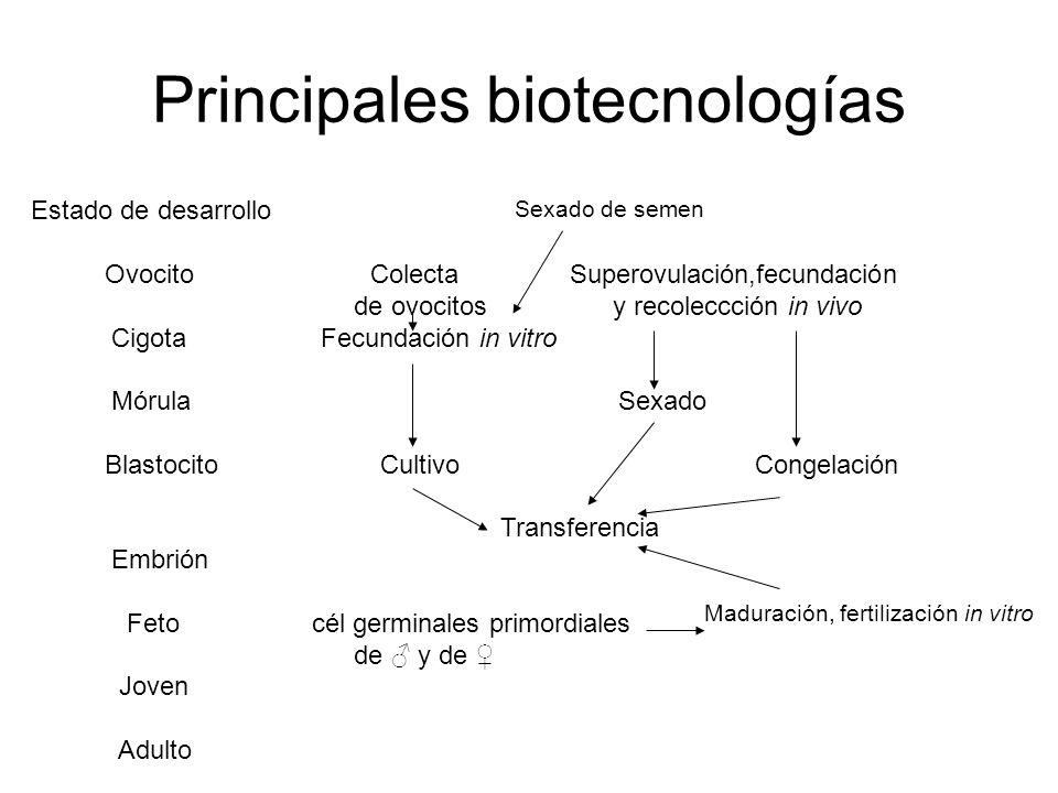 Principales biotecnologías