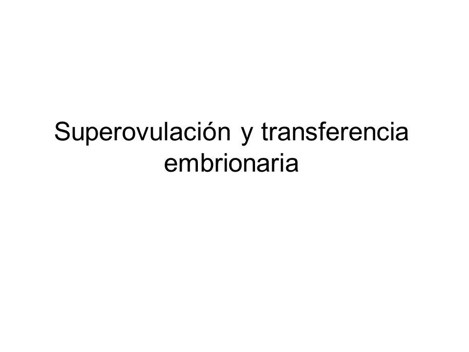 Superovulación y transferencia embrionaria