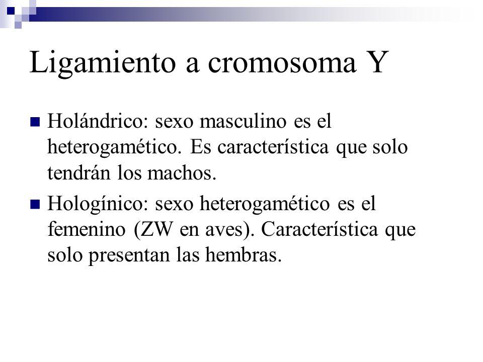 Ligamiento a cromosoma Y