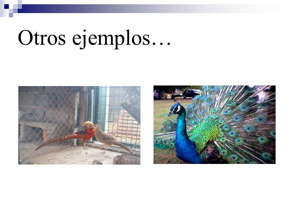 Otros ejemplos…