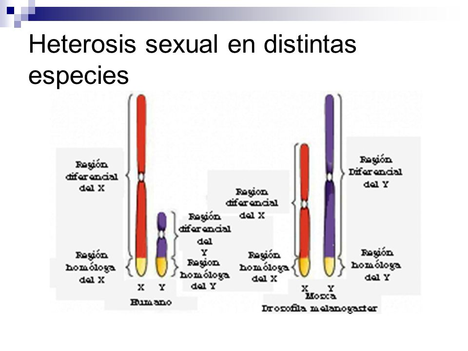 Heterosis sexual en distintas especies