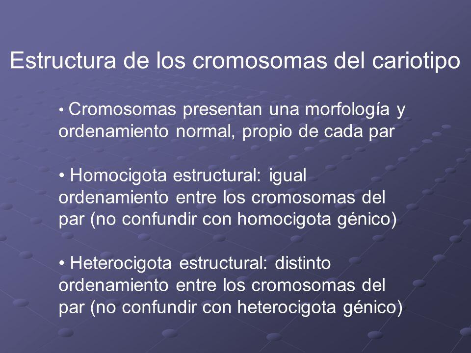 Estructura de los cromosomas del cariotipo