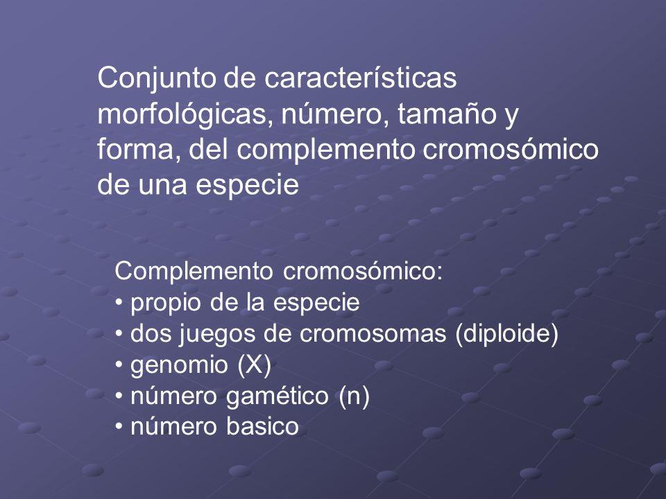 Conjunto de características morfológicas, número, tamaño y forma, del complemento cromosómico de una especie