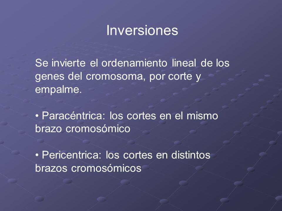 Inversiones Se invierte el ordenamiento lineal de los genes del cromosoma, por corte y empalme.