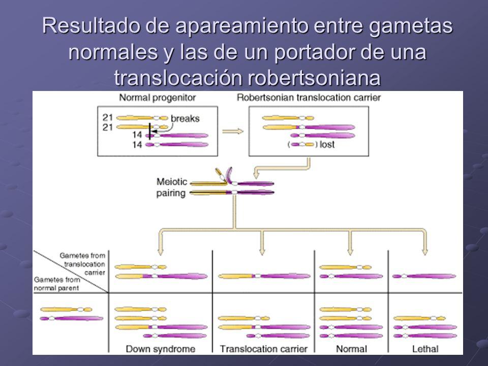 Resultado de apareamiento entre gametas normales y las de un portador de una translocación robertsoniana