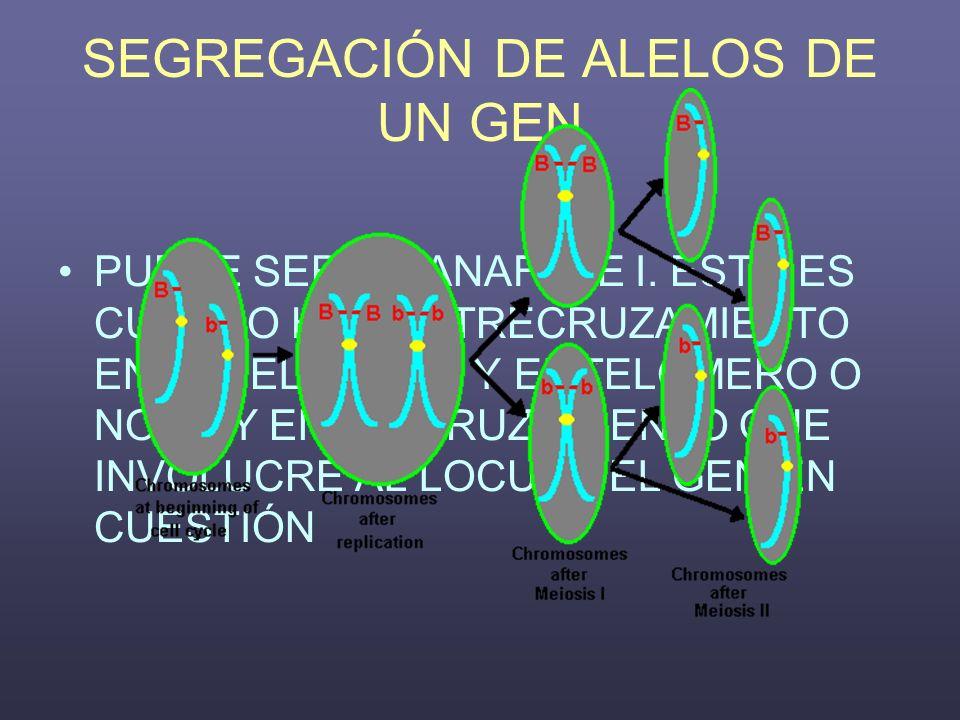 SEGREGACIÓN DE ALELOS DE UN GEN