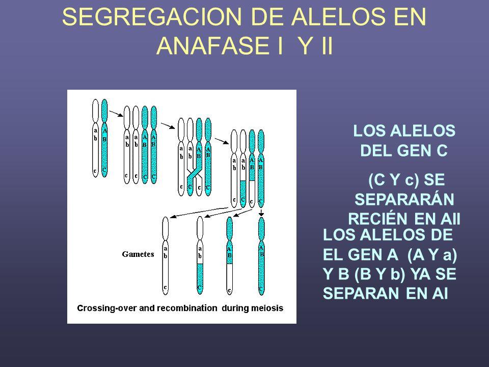 SEGREGACION DE ALELOS EN ANAFASE I Y II