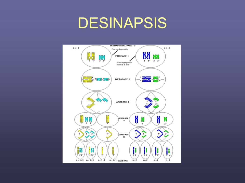 DESINAPSIS