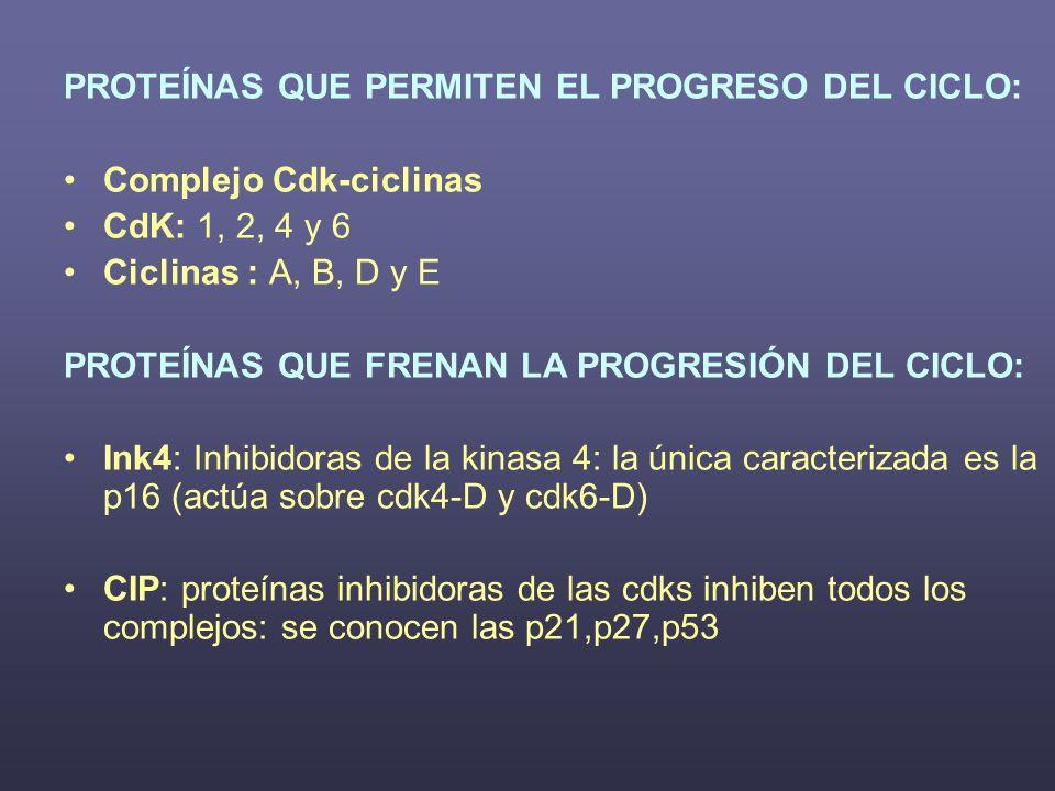 PROTEÍNAS QUE PERMITEN EL PROGRESO DEL CICLO:
