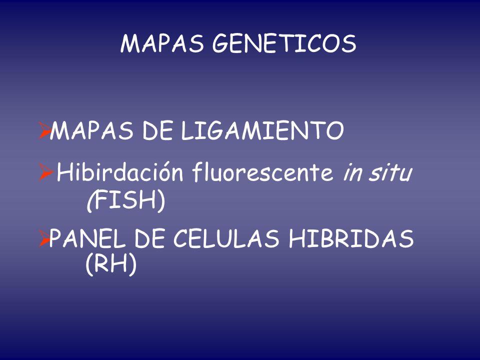 MAPAS GENETICOSMAPAS DE LIGAMIENTO.