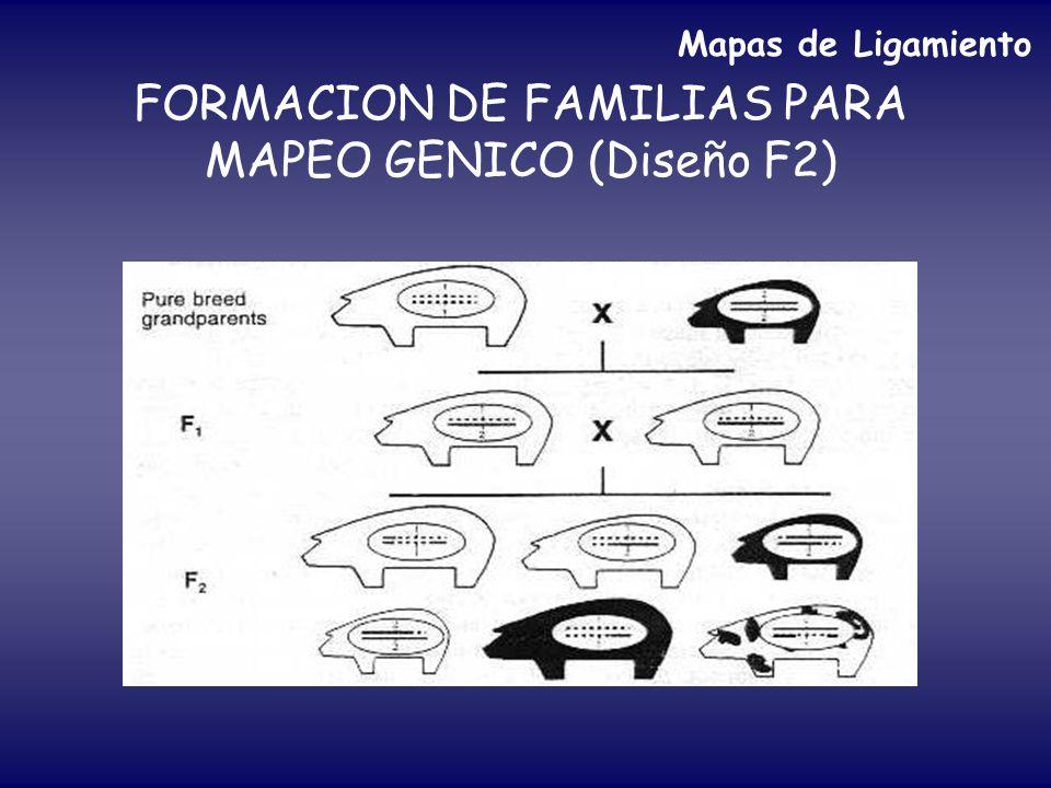 FORMACION DE FAMILIAS PARA MAPEO GENICO (Diseño F2)