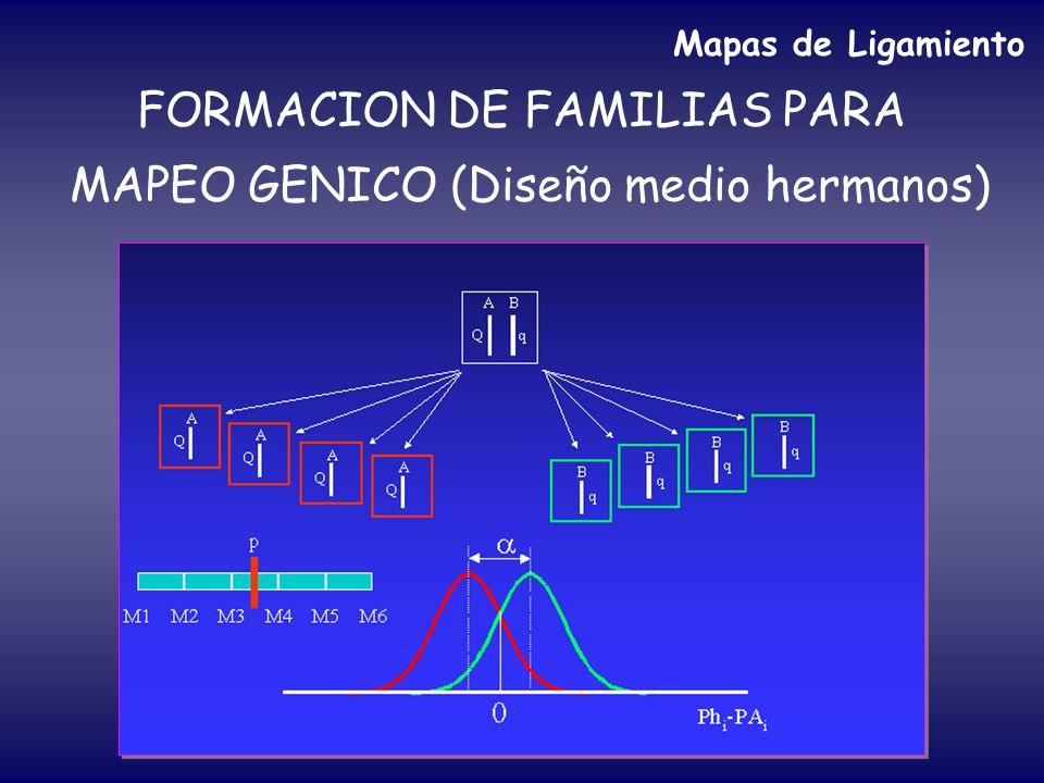 FORMACION DE FAMILIAS PARA MAPEO GENICO (Diseño medio hermanos)