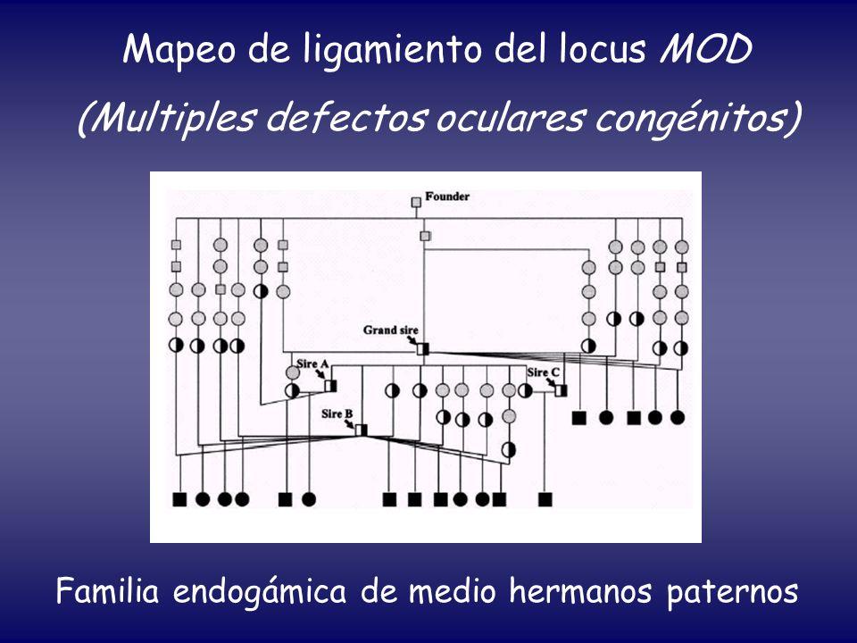 Mapeo de ligamiento del locus MOD