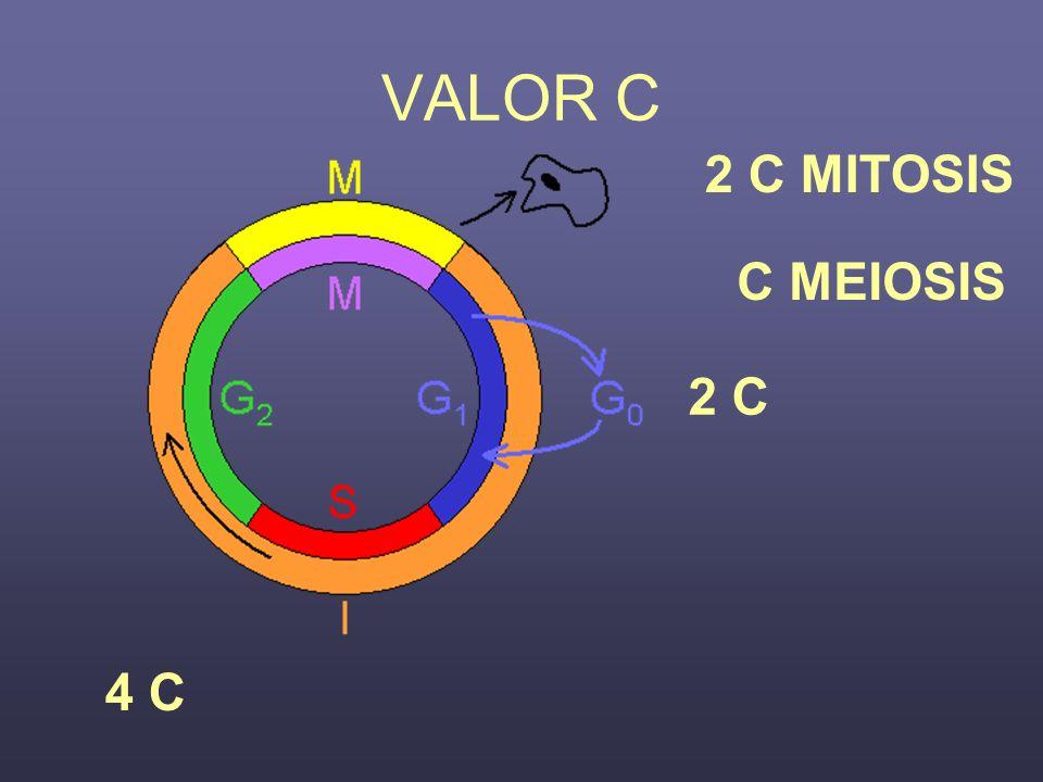VALOR C 2 C MITOSIS C MEIOSIS 2 C 4 C