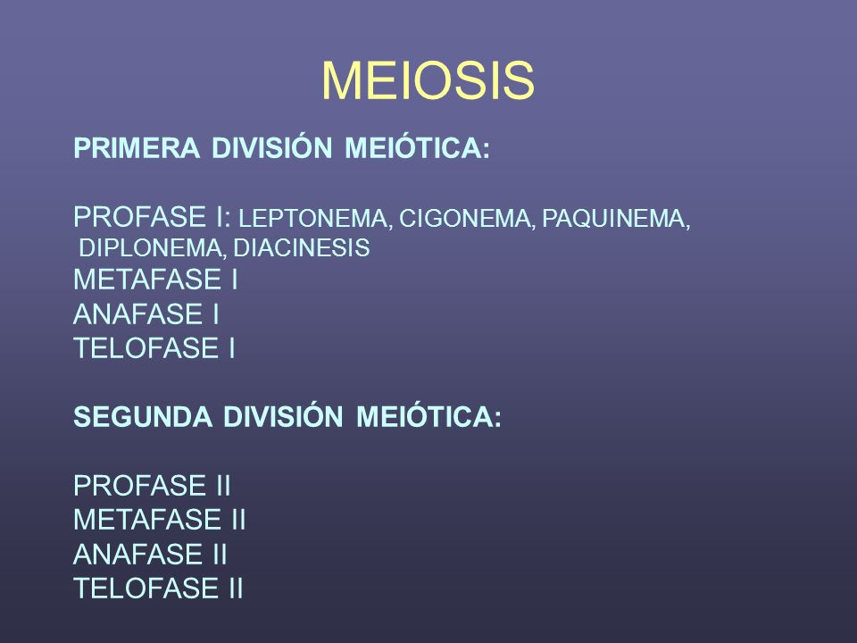 MEIOSIS PRIMERA DIVISIÓN MEIÓTICA: