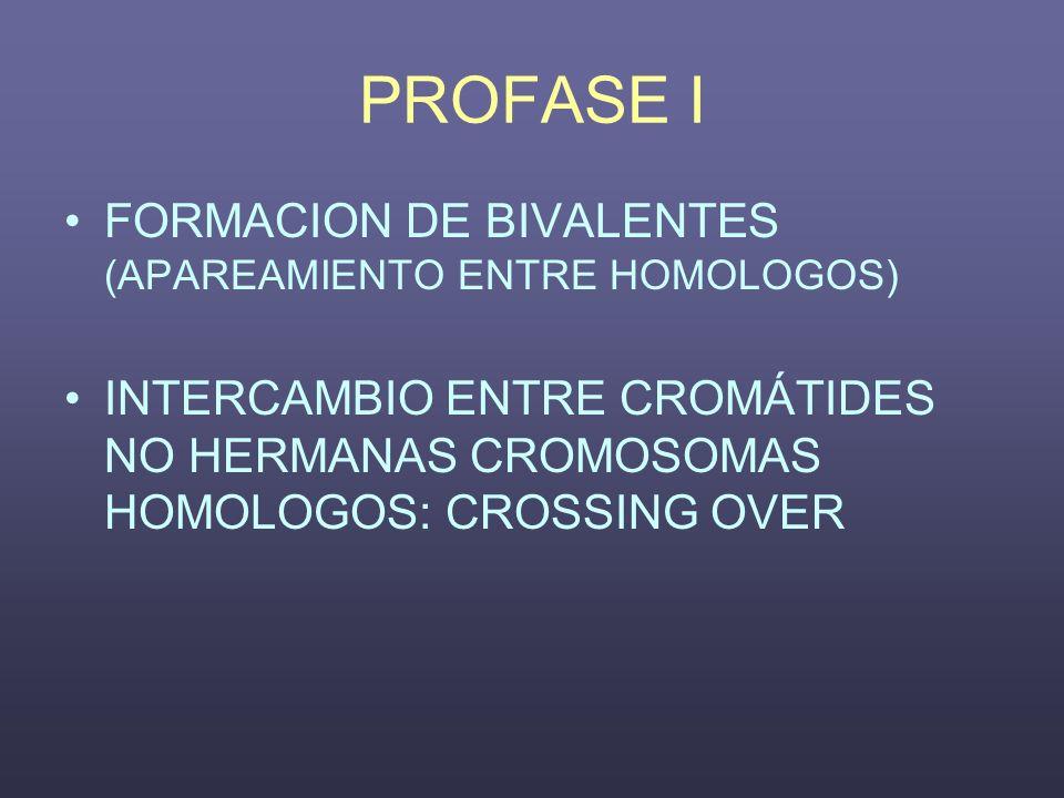 PROFASE I FORMACION DE BIVALENTES (APAREAMIENTO ENTRE HOMOLOGOS)