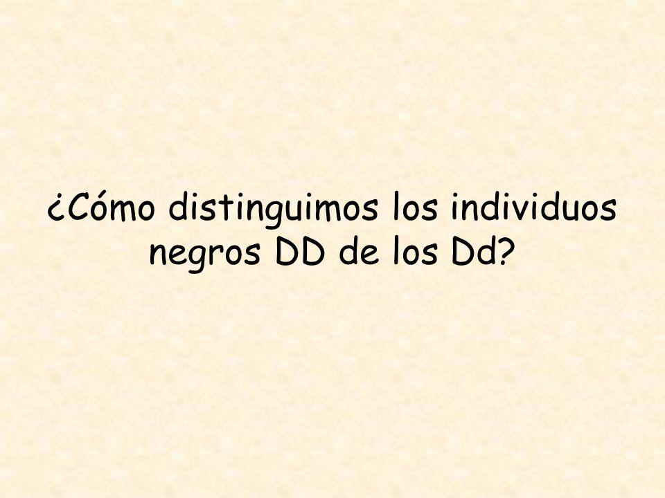 ¿Cómo distinguimos los individuos negros DD de los Dd