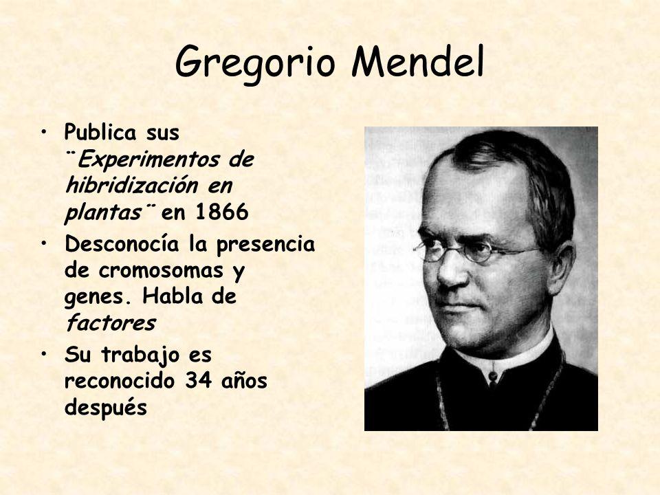 Gregorio Mendel Publica sus ¨Experimentos de hibridización en plantas¨ en 1866. Desconocía la presencia de cromosomas y genes. Habla de factores.