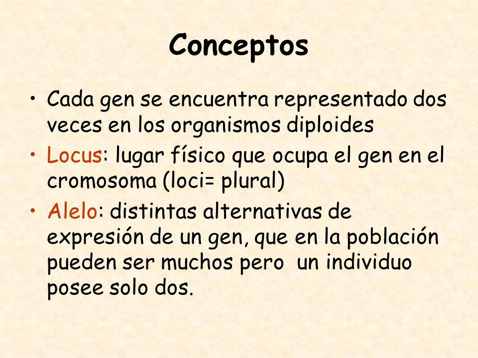 Conceptos Cada gen se encuentra representado dos veces en los organismos diploides.