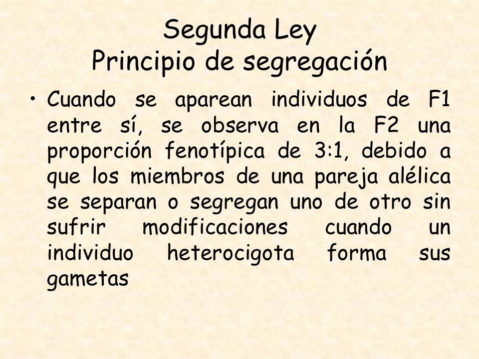 Segunda Ley Principio de segregación