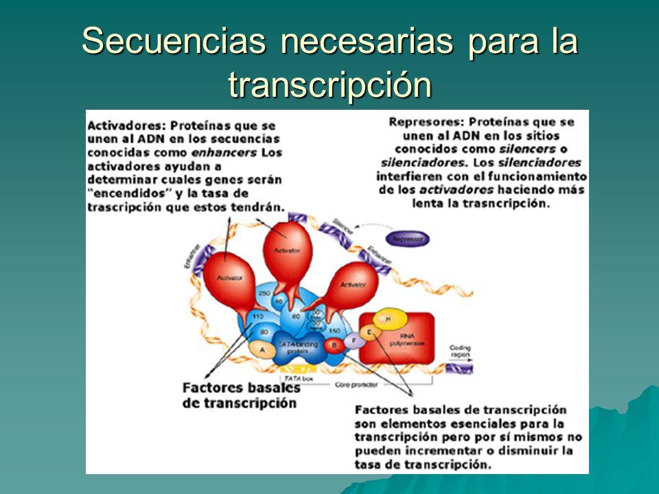 Secuencias necesarias para la transcripción