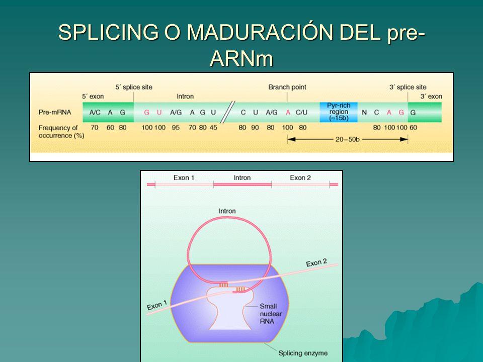 SPLICING O MADURACIÓN DEL pre-ARNm