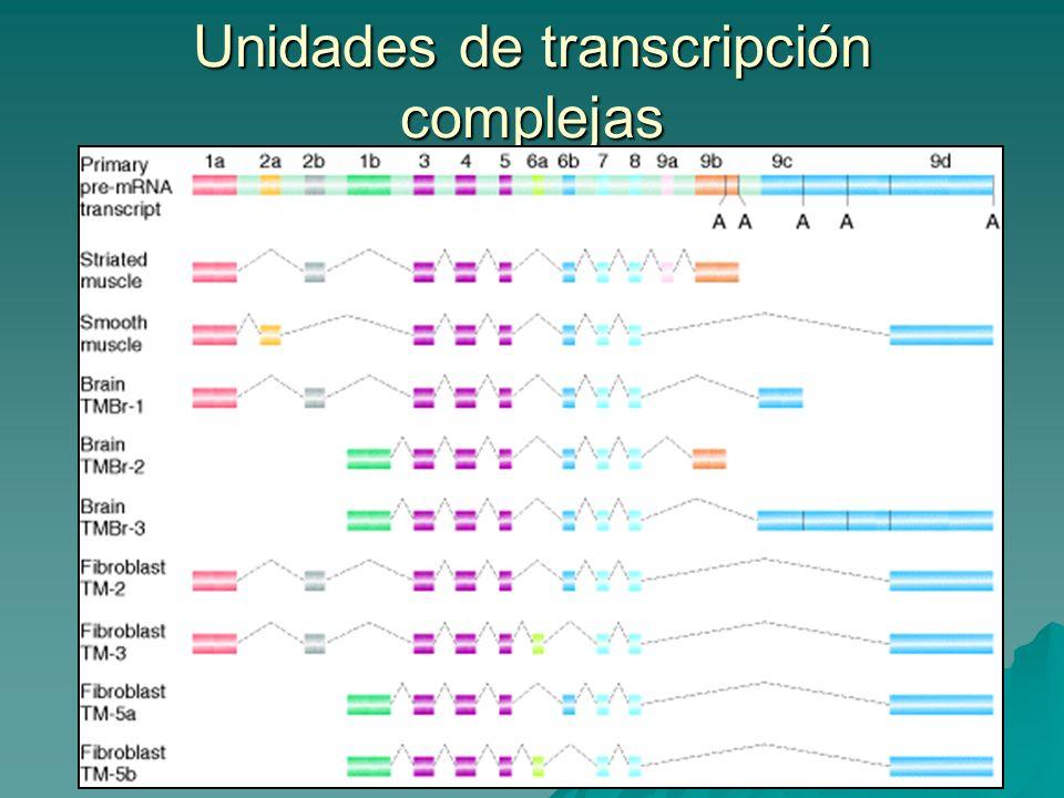 Unidades de transcripción complejas