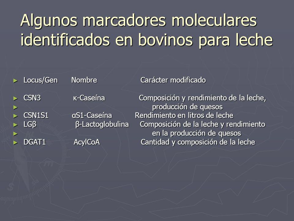 Algunos marcadores moleculares identificados en bovinos para leche