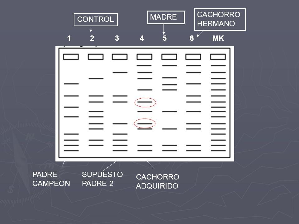 CACHORRO HERMANO. MADRE. CONTROL. 1 2 3 4 5 6 MK.