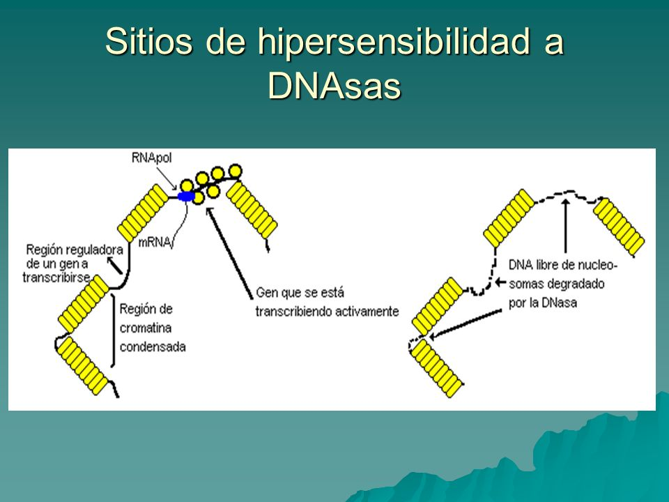 Sitios de hipersensibilidad a DNAsas