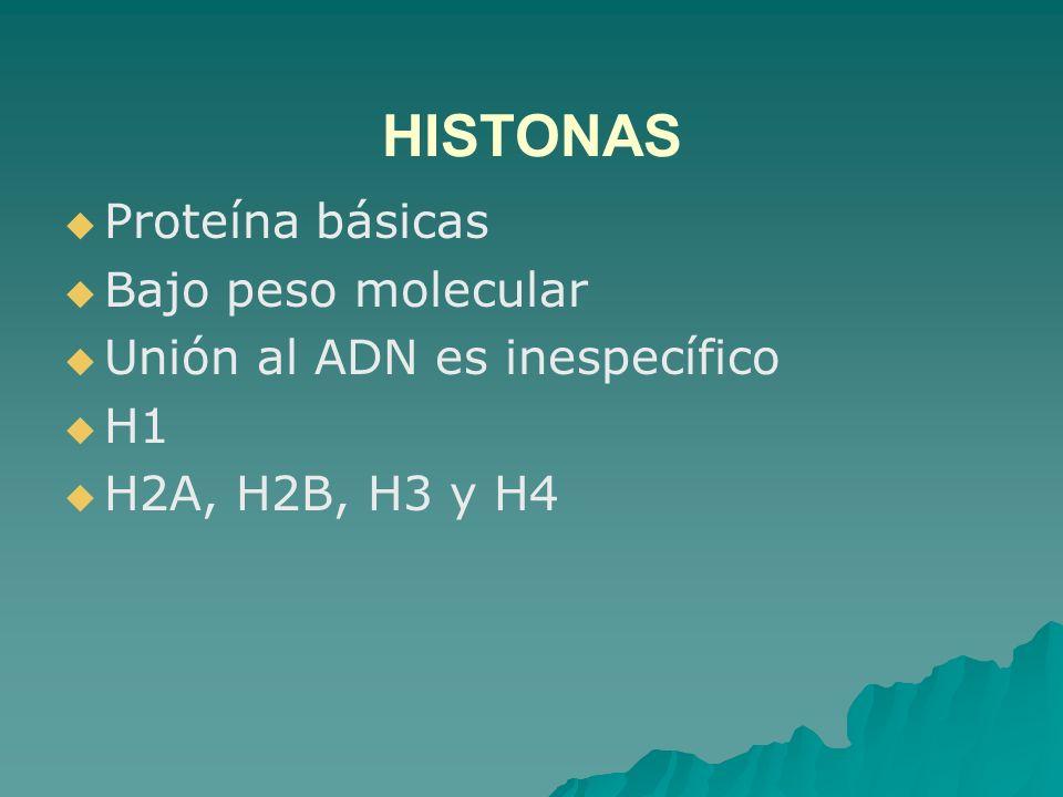 HISTONAS Proteína básicas Bajo peso molecular