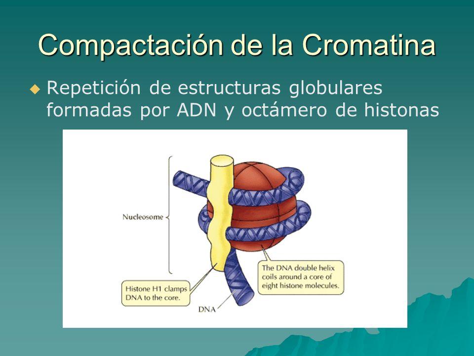 Compactación de la Cromatina