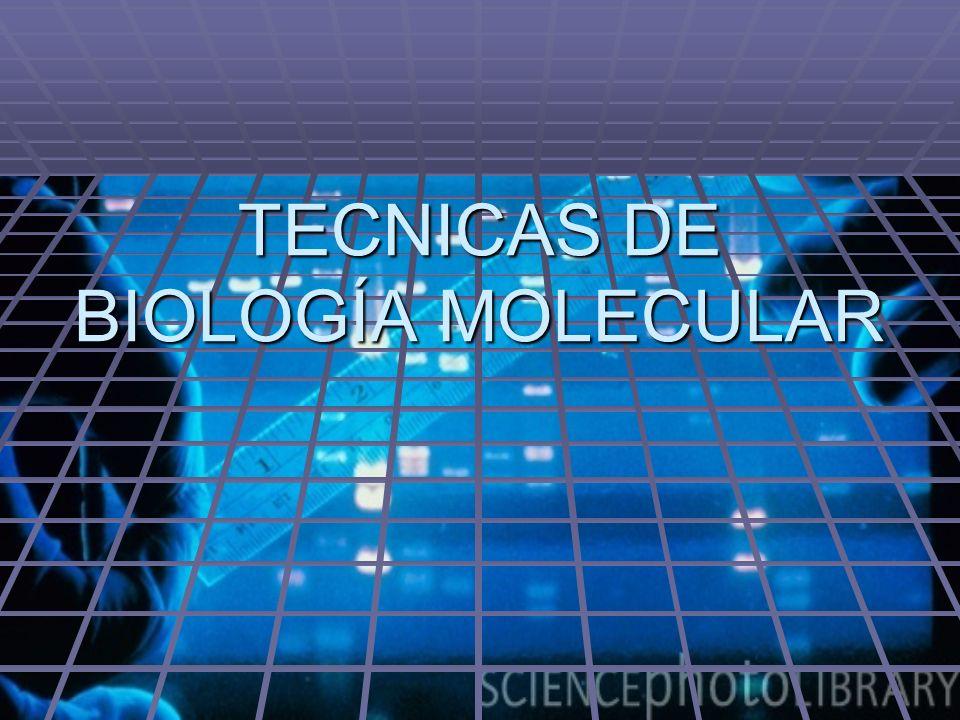 TECNICAS DE BIOLOGÍA MOLECULAR