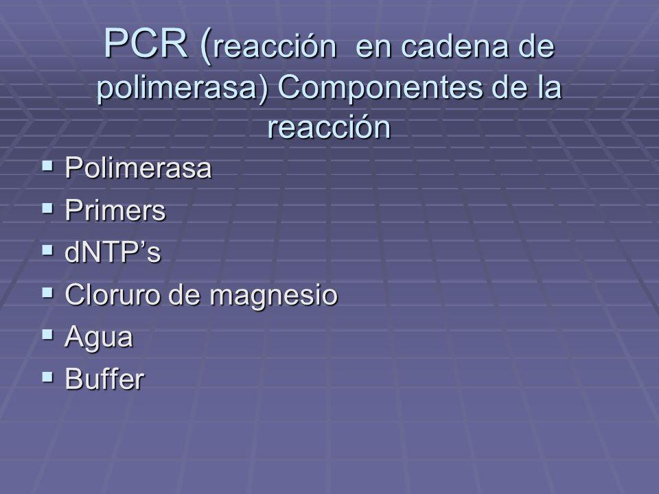 PCR (reacción en cadena de polimerasa) Componentes de la reacción