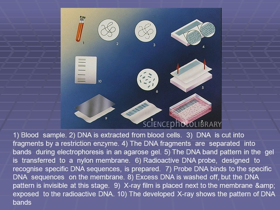 1) Blood sample. 2) DNA is extracted from blood cells