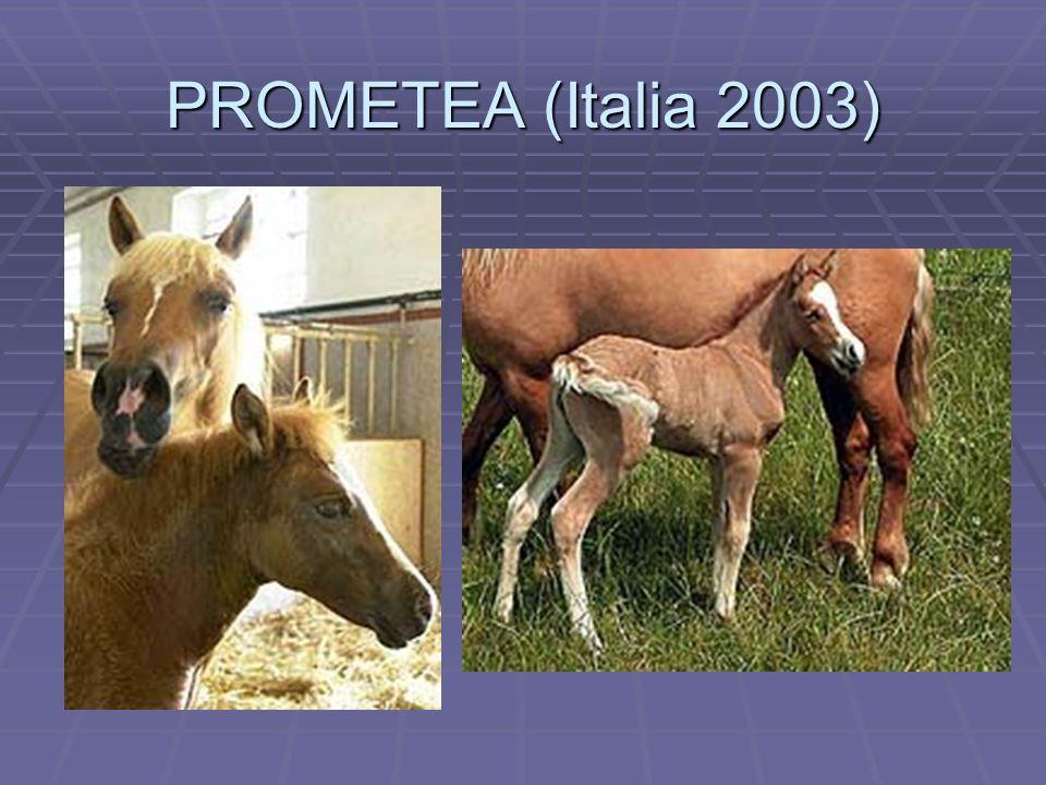 PROMETEA (Italia 2003)