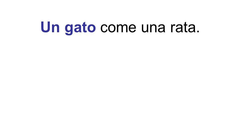 Un gato come una rata. ¿Cómo sabemos que Un gato es el sujeto de la oración
