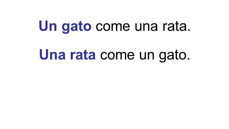 Un gato come una rata. Una rata come un gato.
