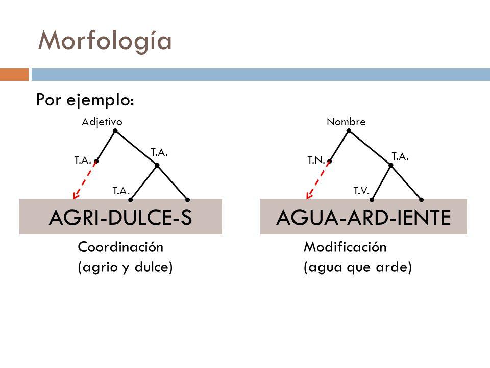 Morfología AGRI-DULCE-S AGUA-ARD-IENTE Por ejemplo: Coordinación