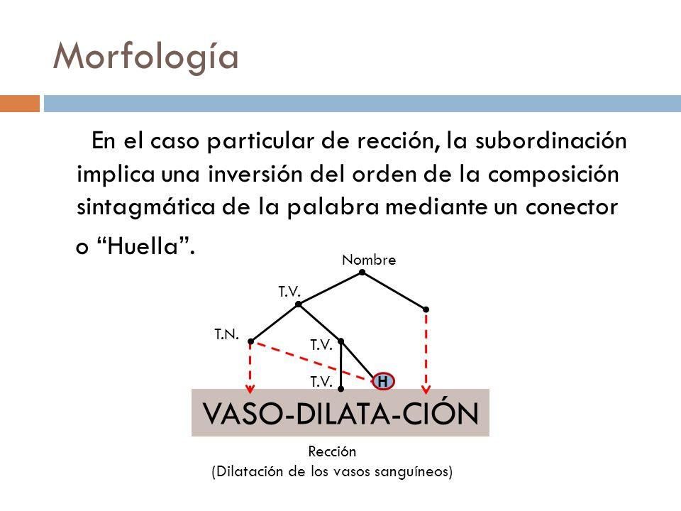 (Dilatación de los vasos sanguíneos)