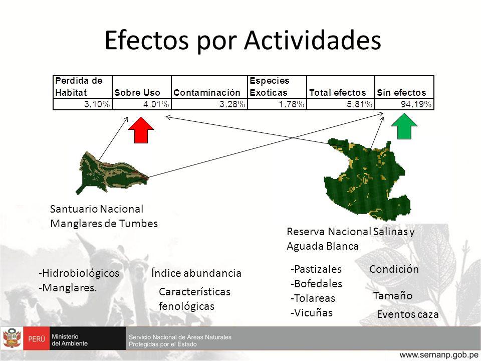 Efectos por Actividades
