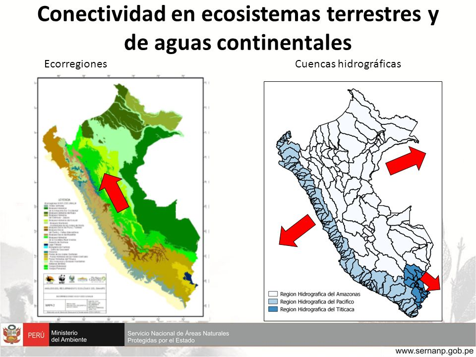 Conectividad en ecosistemas terrestres y de aguas continentales