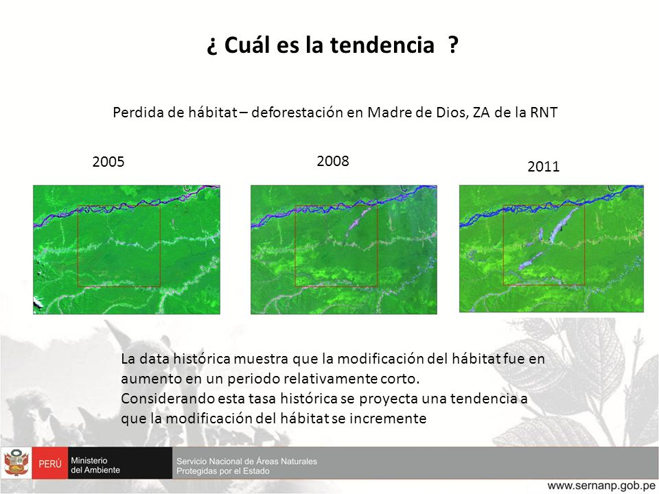 ¿ Cuál es la tendencia Perdida de hábitat – deforestación en Madre de Dios, ZA de la RNT. 2005.