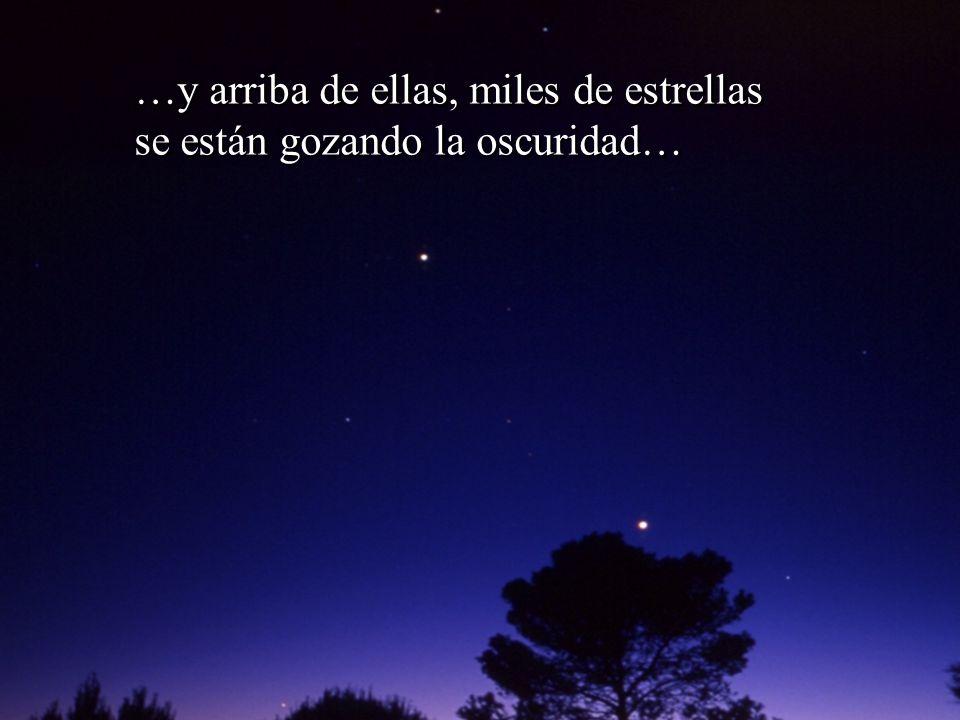 …y arriba de ellas, miles de estrellas