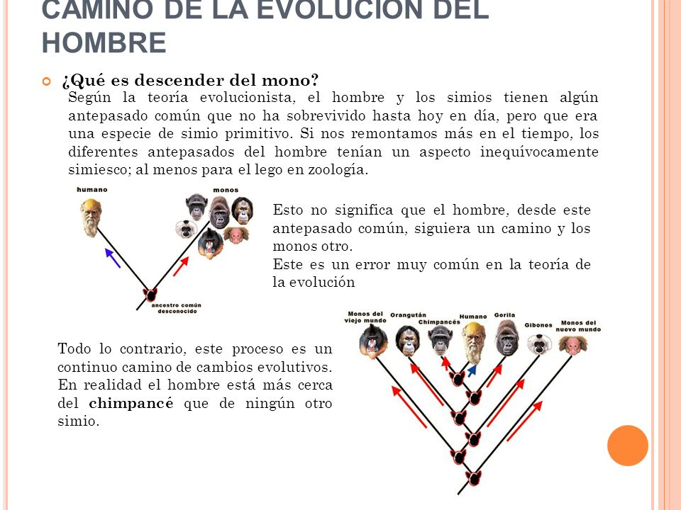 CAMINO DE LA EVOLUCIÓN DEL HOMBRE
