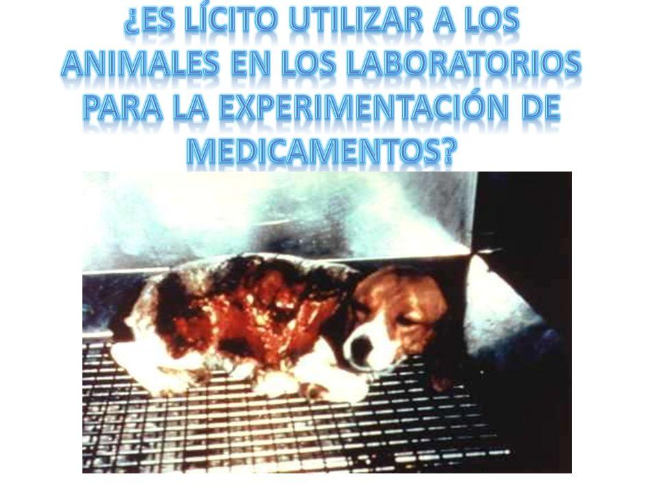 ¿Es lícito utilizar a los animales en los laboratorios para la experimentación de medicamentos