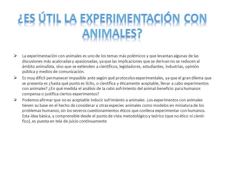 ¿Es útil la experimentación con animales