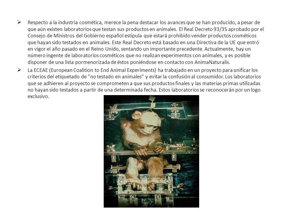 Respecto a la industria cosmética, merece la pena destacar los avances que se han producido, a pesar de que aún existen laboratorios que testan sus productos en animales. El Real Decreto 93/35 aprobado por el Consejo de Ministros del Gobierno español estipula que estará prohibido vender productos cosméticos que hayan sido testados en animales. Este Real Decreto está basado en una Directiva de la UE que entró en vigor el año pasado en el Reino Unido, sentando un importante precedente. Actualmente, hay un número ingente de laboratorios cosméticos que no realizan experimentos con animales, y es posible disponer de una lista pormenorizada de éstos poniéndose en contacto con AnimaNaturalis.